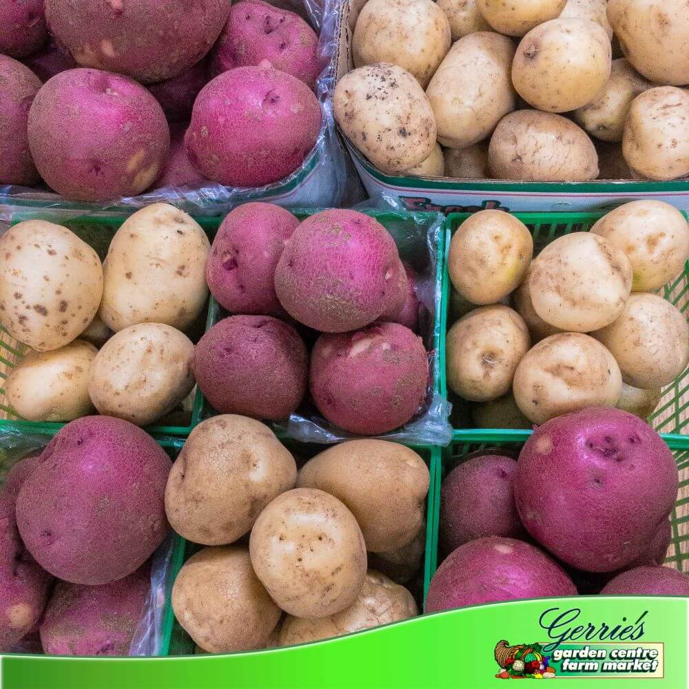 Red Potatoes - 10 LBS