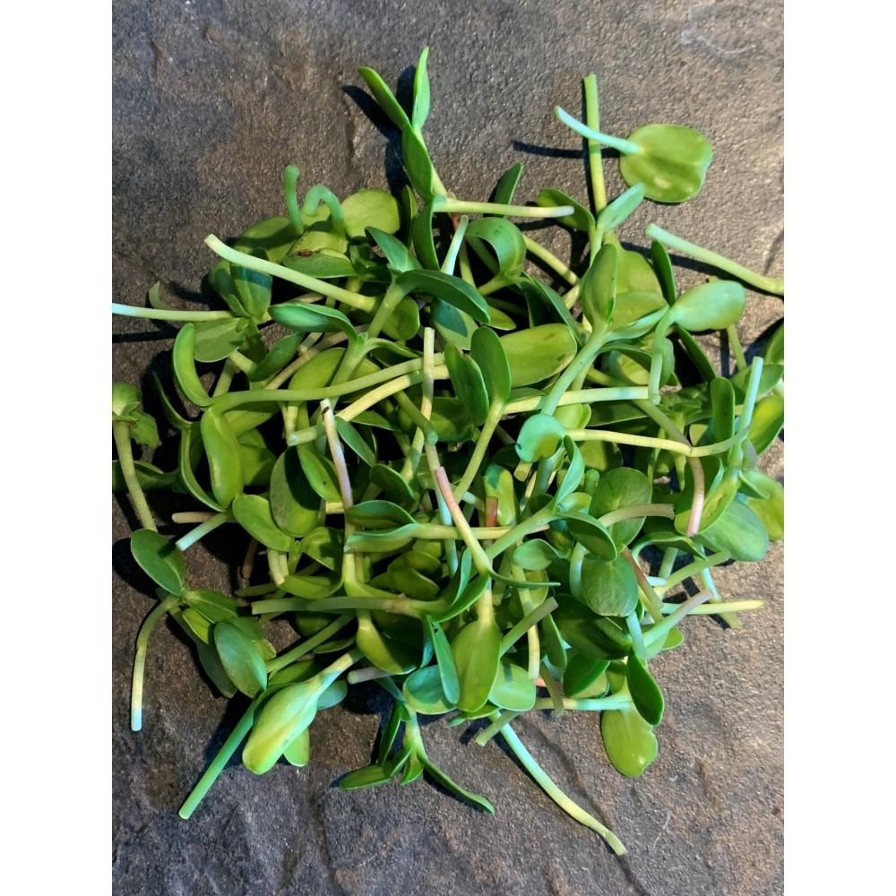 Microgreen Sunflower Shoots