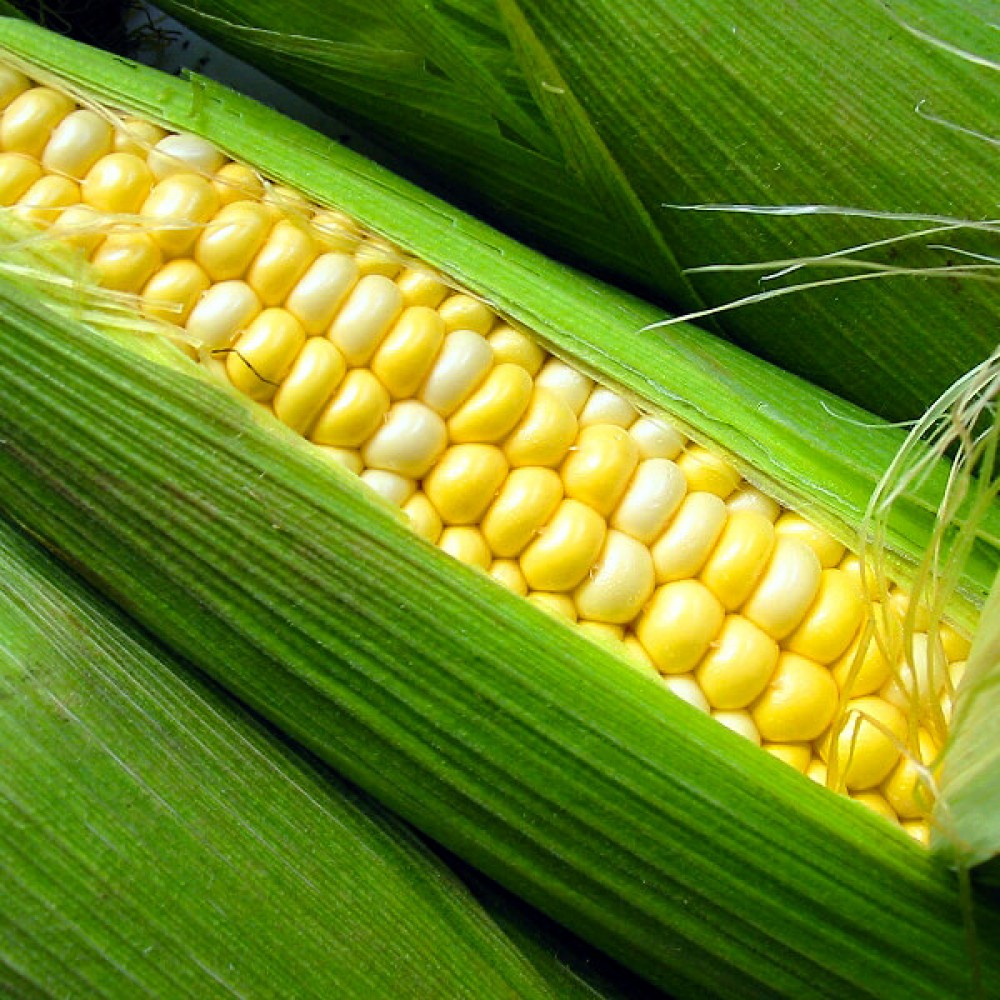Strom's Sweet Corn